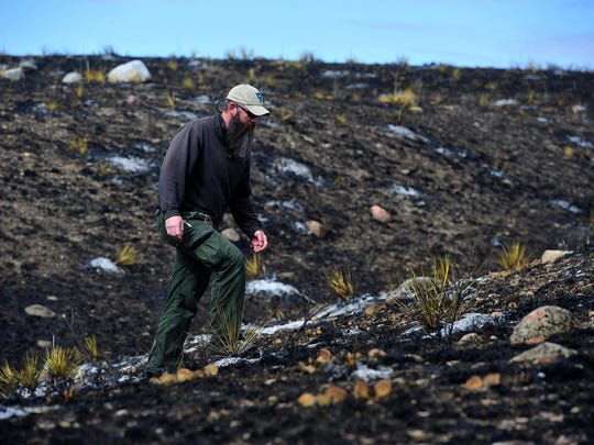Scott Meneely, fire operations specialist with the BLM, walks through a large archeological site where thousands of stone cultural features have been uncovered by a prescribed burn.