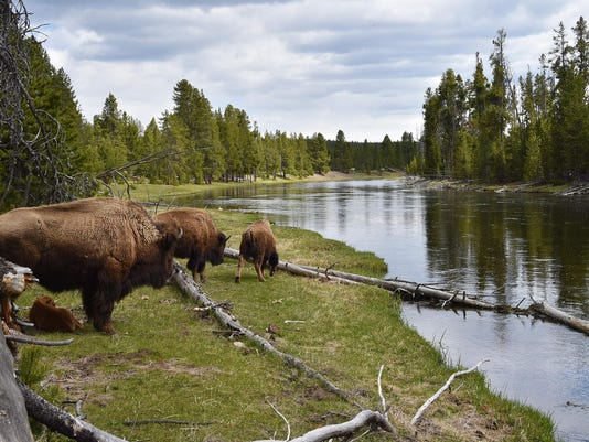 US-PARK-YELLOWSTONE