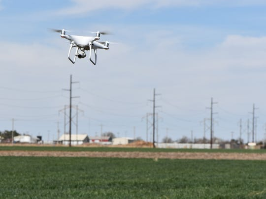 Drones are being used to monitor weekly growth on the
