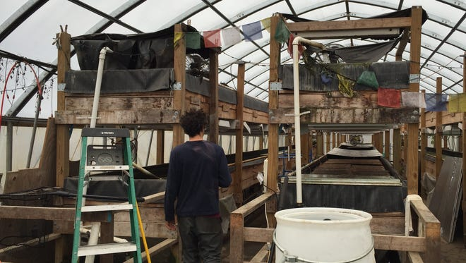 Allen Gandelman walks in the Main Street Farms greenhouse containing tilapia and baby greens.
