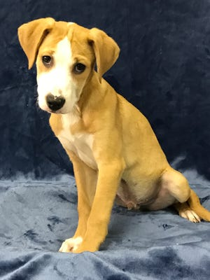 Obi-Wan Kenobi is part of a 6-dog Star Wars litter. He's a 4-month-old border collie and pitbull blend. He's a little shy at first, but is good with other dogs and cats. He's a lap puppy. Adoption fee is $200; includes neutering, microchipping, three shots, kennel cough shots and rabies. Visit Tails of Rescue Adoption Center, 981 Lake Blvd., Redding. Call 448-7444. Go to http://tailsofrescue.org.