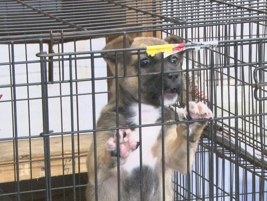 635553140568396855-animal-shelter2