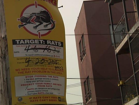 635968277353138502-Rats-poster2.jpg