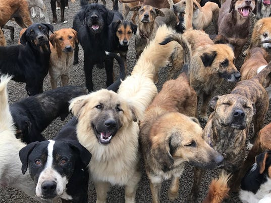 Territorio de Zaguates is land of the strays