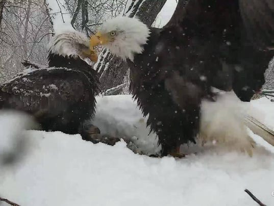 636601701088799468-eagles1.jpg
