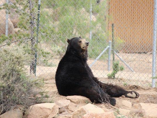 Bears rescued
