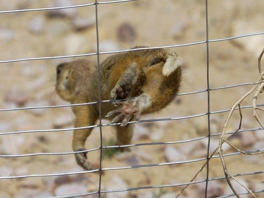 wild animals 02.jpg