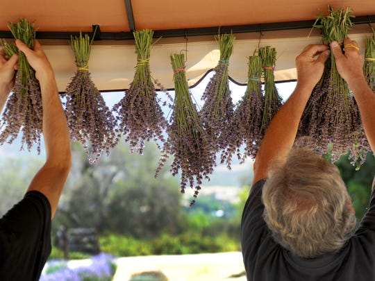 Gabe Luboff and his father, Tony, both with Ojai Lavender Farms, hang up some of the lavender for the 2017 Ojai Lavender Festival.