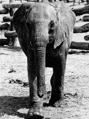 1975: An elephant at Great Adventure.