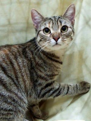 Pet of the Week: Mila