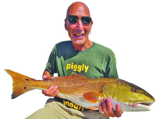Connecticut angler Michael Shopenn tempted this 33-inch redfish with a live shrimp in north Matlacha Pass, on his Wildfly Charter Friday with Capt. Gregg McKee.