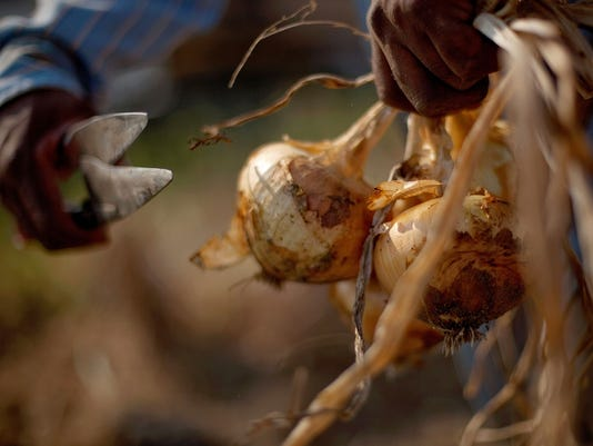 Vidalia Onion Battle_Thre