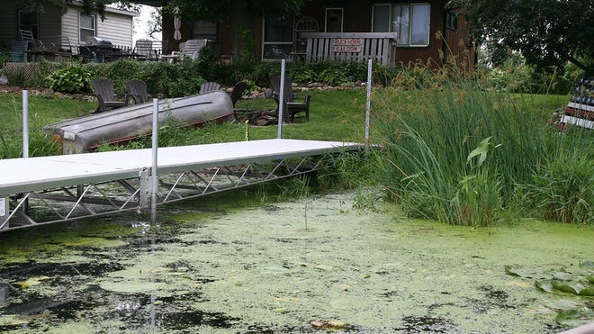 Toxic algae may look like pea soup, green paint or floating mats of scum, and it will sometimes have a bad smell.