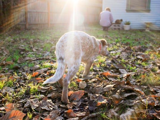 Yard wanderer