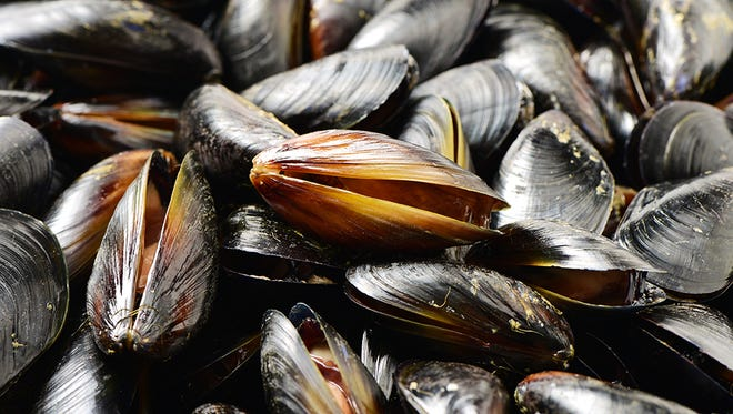 Environmental contaminants are a growing concern for Americans eating seafood.
