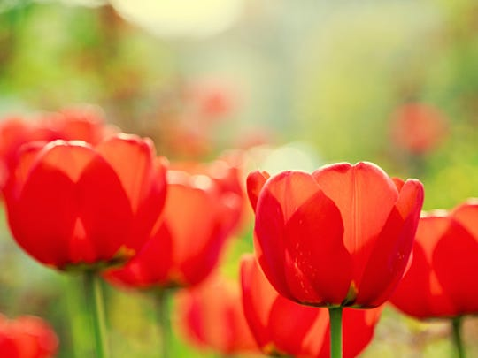 Red Bank Battlefield in National Parks will host its annual Flower Show on Sunday.