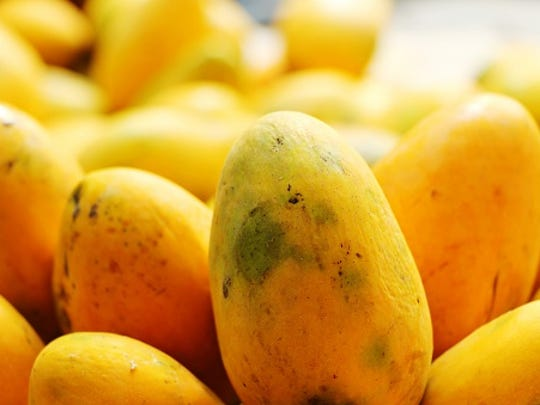The 22nd annual Mango Mania tropical fruit fair returns to Cape Coral for two days this weekend.