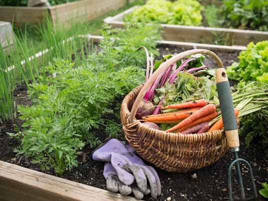 veggie gardenjpg - Fall Vegetable Garden