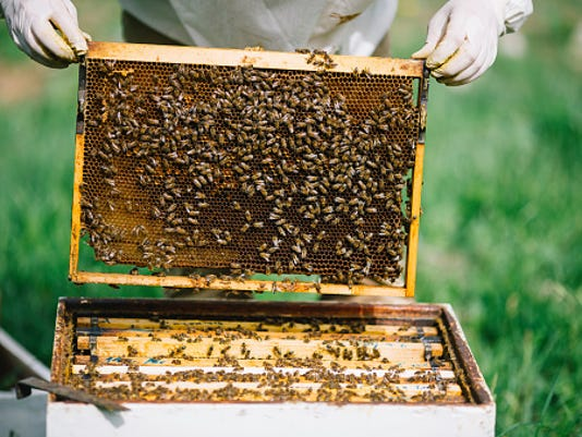 636462758998330045-Bee-Hive.jpg