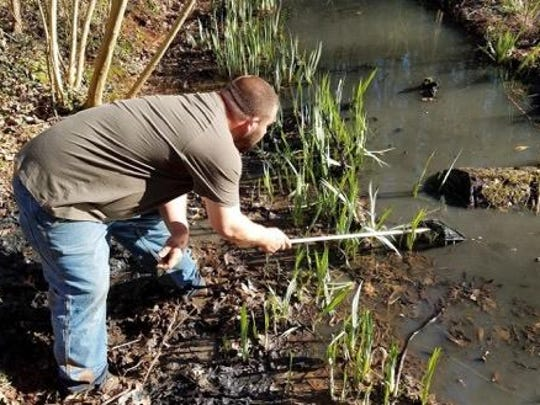 Travis Ogle searches for goldfish in the pond at Ijams.
