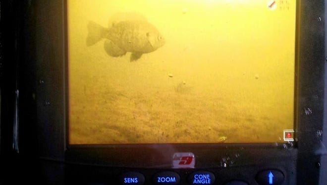 Underwater cameras, as with flashers, are worth their weight in gold when looking for early season panfish.
