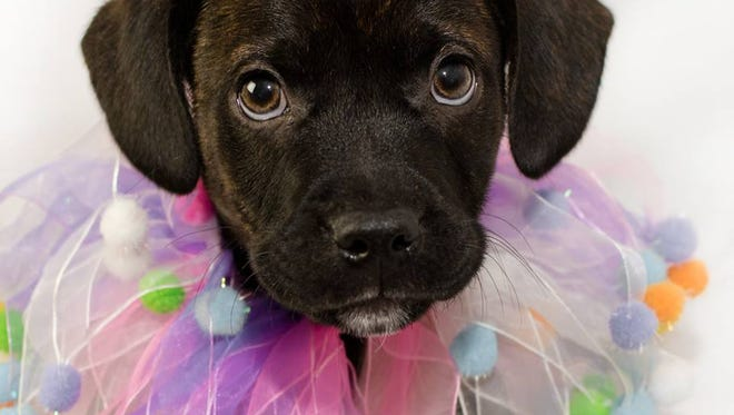 Asheville Humane Society has shelter and adoption services, low-cost clinics and more.