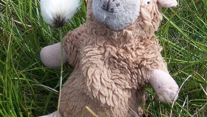 This is the missing Stuffed Fluffy animal belonging to Seton teacher N. Ruth Brown.