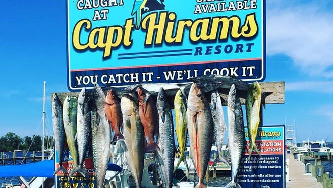 Capt. Terry Wildey, of Big Easy charters out of Capt Hiram's Resort in Sebastian, steered his clients to a full fish box and mixed bag including dolphin, mangrove snapper and big kingfish. Will this weekend's fishing be just as successful?