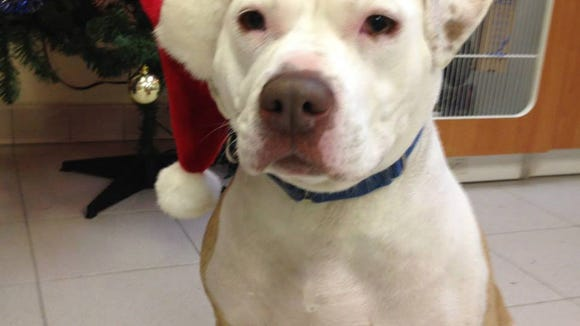 For Christmas This Year: Don't Shop, Adopt!