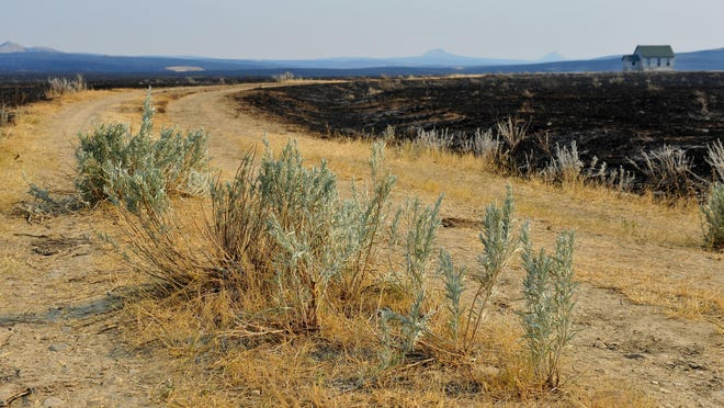 """The spread of noxious weeds is a concern at eastern Montana's 270,000-acre Lodgepole Complex fires, which are now contained. """"Weeds love to have a big disturbance,"""" said BLM botanist Wendy Velman."""