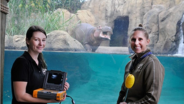Dr. Jessye Wojtusik and Africa head keeper Wendy Rice at Hippo Haven in the Cincinnati Zoo & Botanical Garden with the ultrasound equipment.