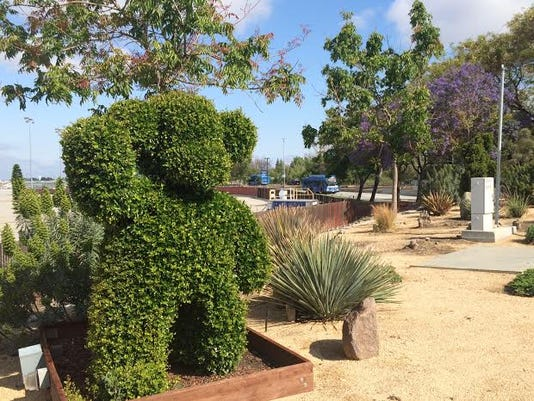 635684237131312239-01-Mineta-San-Jose-Int-l-Airport---The-topiary-bear-that-greets-motorists-at-SJC-is-in-no-danger