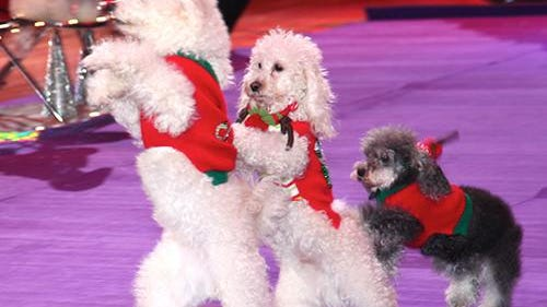 The Olate Dogs will perform at the Visalia Convention Center Sunday, Dec. 11.