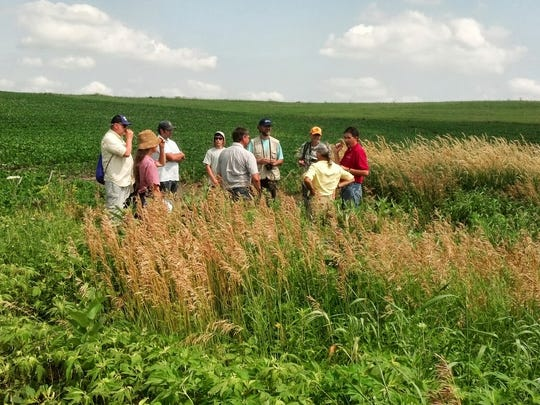 A group of visitors take a look how prairie strips