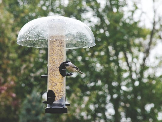 636366874335035805-chickadee-with-weather-guard.jpg