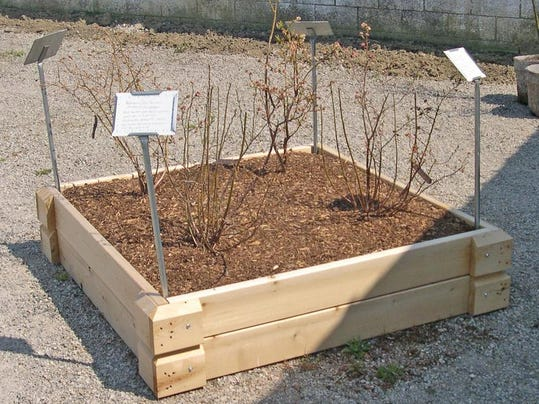 -Raised Bed Blueberry.JPG_20140301.jpg