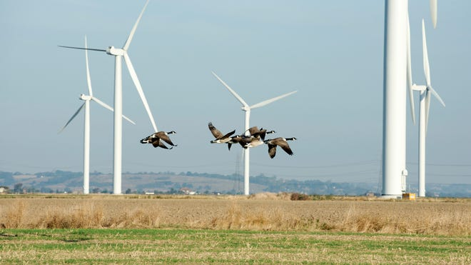 Wind turbines pose a serious risk to birds, as do human structures that they sometimes fly into, but outdoor domestic cats are still the most serious threat of all.