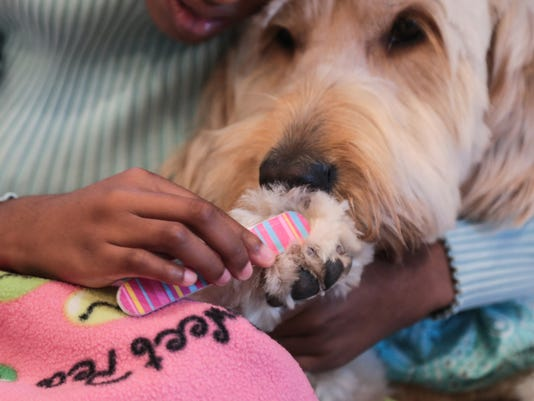 GOlden doodle service dog protects Mich. woman from siezures