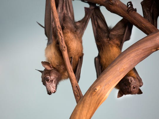 The Whiskeytown Bat Chat experience meets June 2.