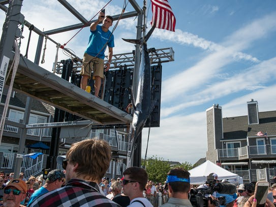 A White Marlin Open staff member hoists a qualifying