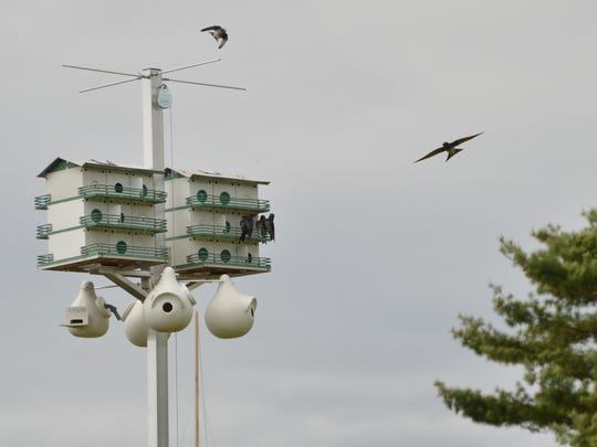 One of the new purple martin houses at City Docks in Oconto.
