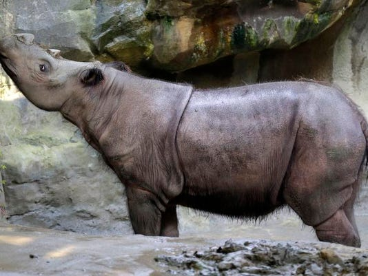 Endangered Rhino Death