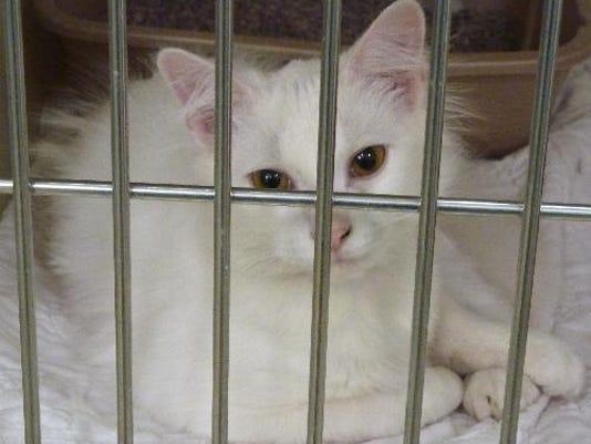 40739 artic cat.jpg