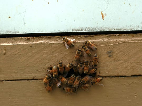 IOW 0703 Bees 04.jpg