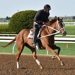 The 3-year-old filly I'm a Chatterbox, owned by Fletcher and Carolyn Gray of Pleasant Hope, is one of the favorites for Friday's Kentucky Oaks.