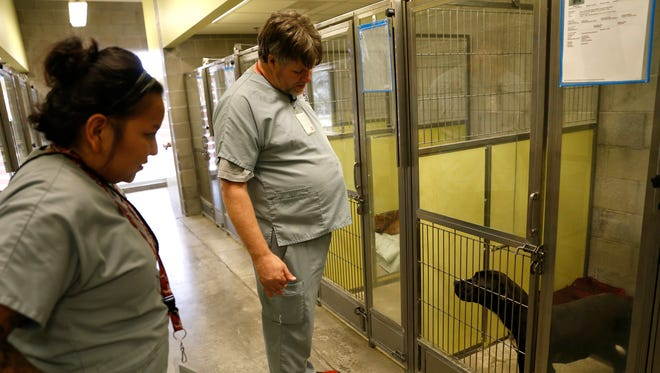 Farmington Animal Shelter kennel technicians Shawnee Begaye and Jimmy McKinnon check on a dog named Whazhoni Tuesda at the Farmington Animal Shelter. Whazhoni was recently surrendered to the shelter by a resident of La Plata.