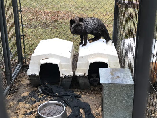 Eleven animals were rescued from squalor at a Sanford