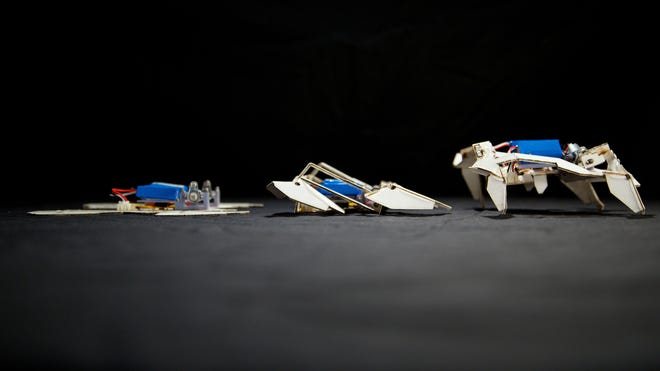 A self-folding, crawling robot in three stages.