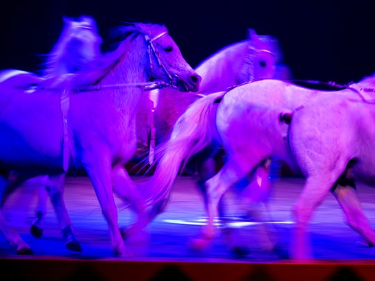 Erika Zerbina's horses circle the center ring during the 84th Hadi Shrine Circus at The Ford Center in Evansville, Ind., on Friday, Nov. 24, 2017. This photo was taken with a slow shutter speed which allows for motion blur.