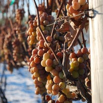 The Cork: Rugged grapes make great Wisconsin wine